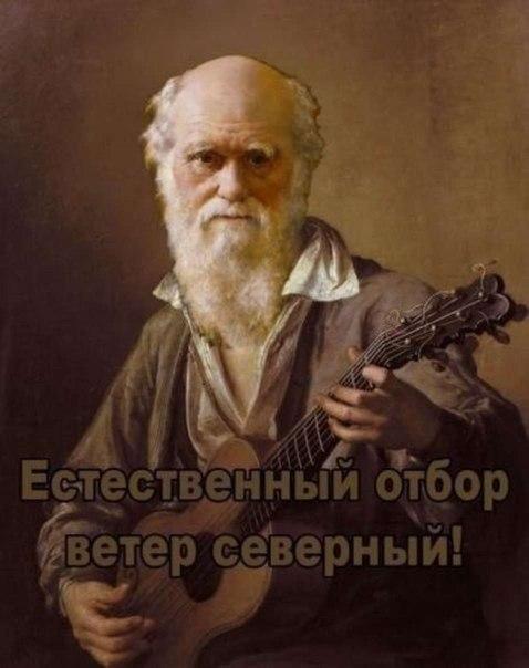darvin.jpg